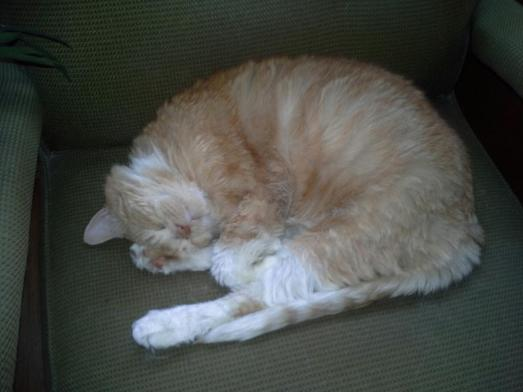 Taking a cat nap. NIGE!!!