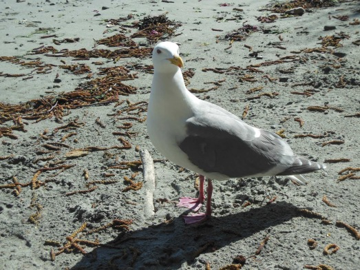 Please, seagull on the beach. Teach me the answers to the mysteries of life...